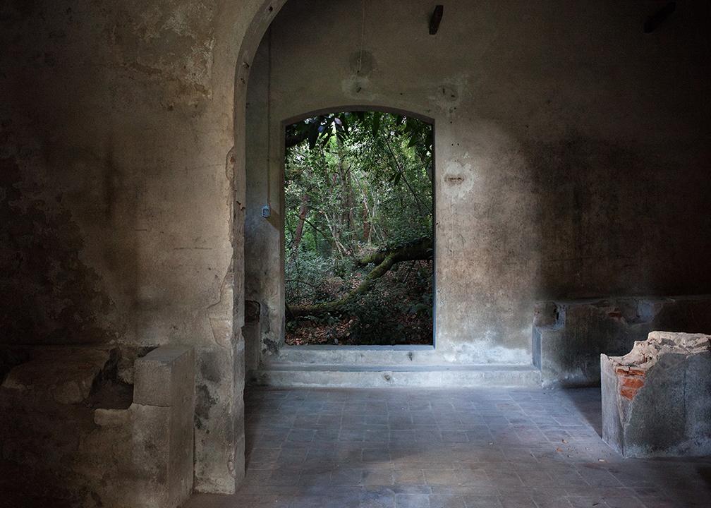 Gianluca Maver_Walking Into_Pinetum